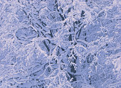 Tree branches covered with snow on a winter day. Background
