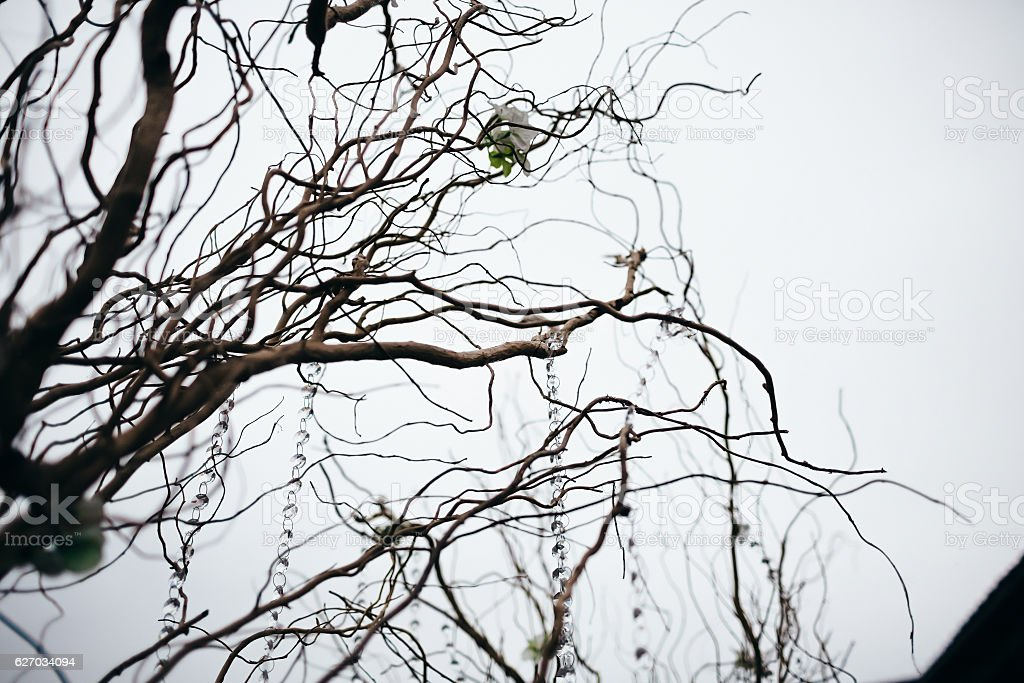 tree branches, decorations for wedding stock photo