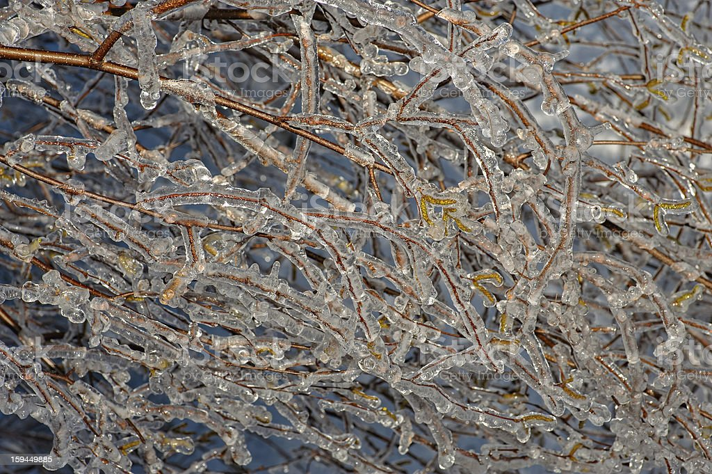 Tree branches frozen in ice royalty-free stock photo