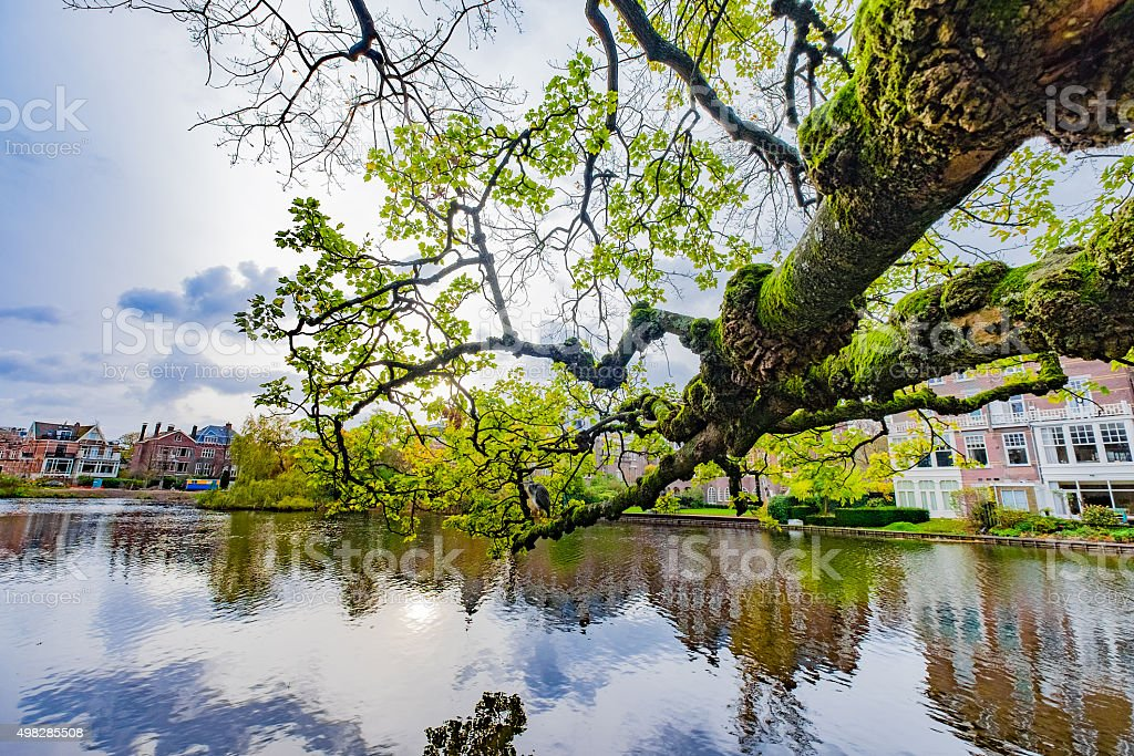 Tree branches Leaning over a lake, a gorgeous scenic view. stock photo