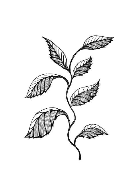 Tree branches – zdjęcie