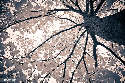 Branches of treeMore like this