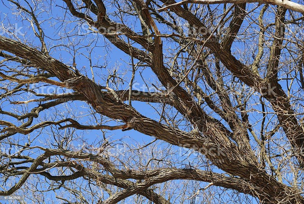 Tree Zweige – Foto