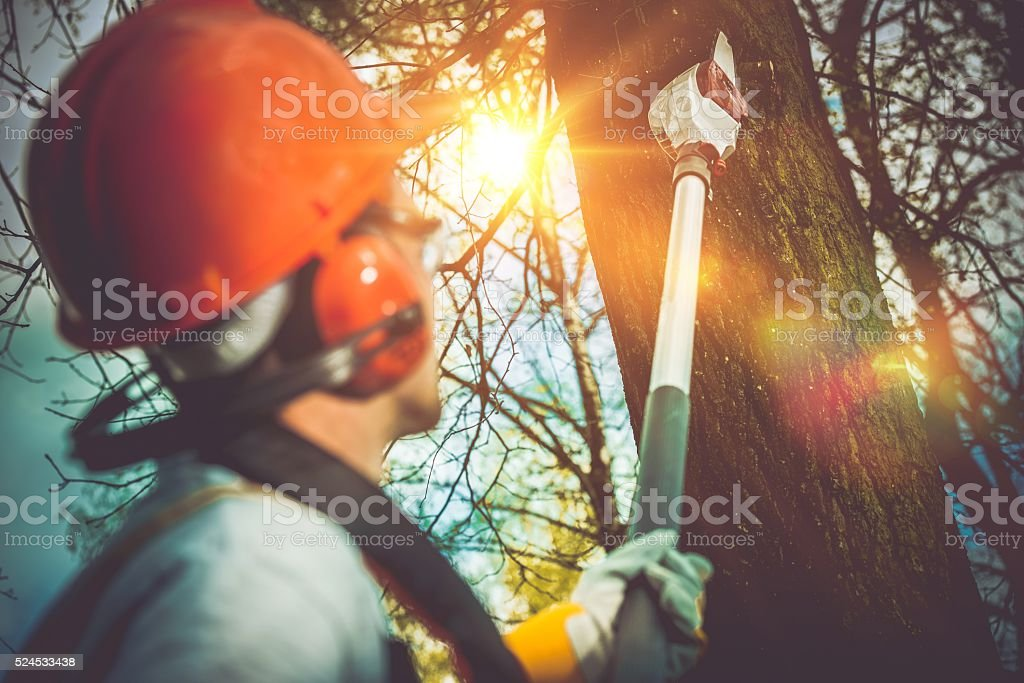 Tree Branches Pro Cutting stock photo
