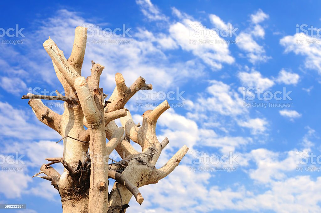 Tree branches trimmed with blue sky foto royalty-free