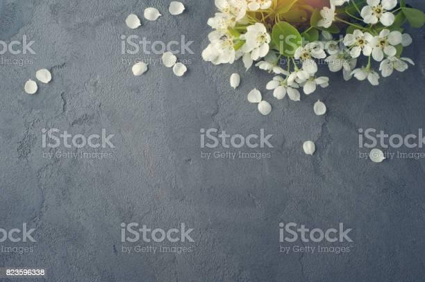 Tree branches with flowers picture id823596338?b=1&k=6&m=823596338&s=612x612&h=t gcd gv 2ug18yswzyjhhpxqnxqqs9bb6vug zebpi=