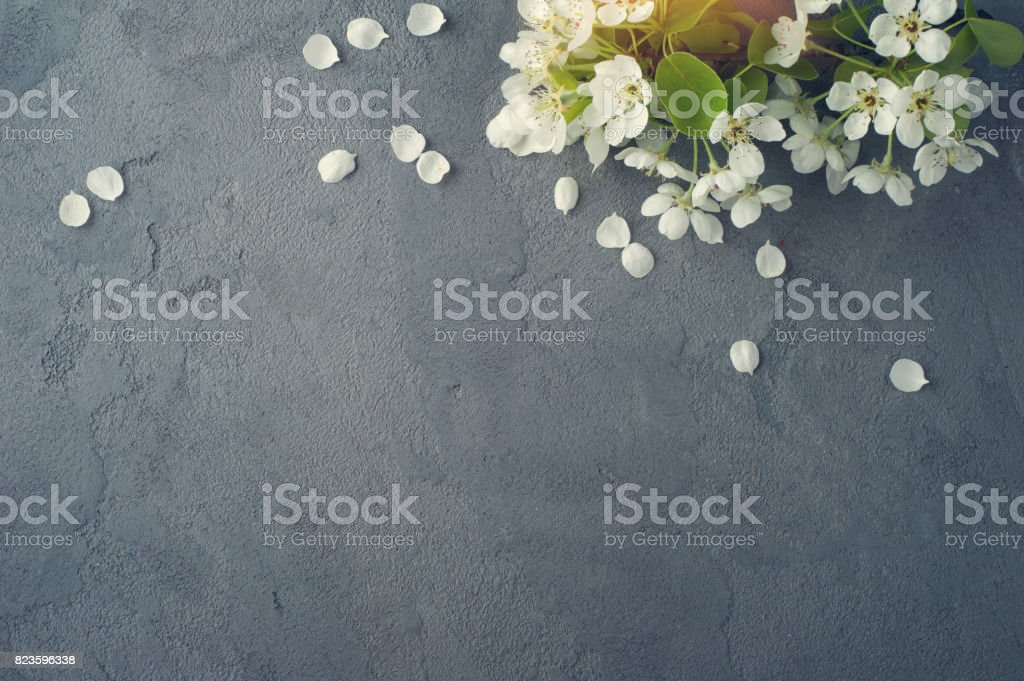 Tree branches with flowers stock photo
