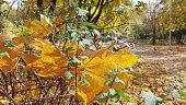 Colorful fall season. Autumnal foliage backdrop. Fall grunge texture.
