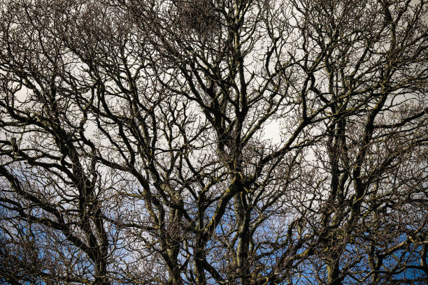 Tree branches with no leaves stock photo