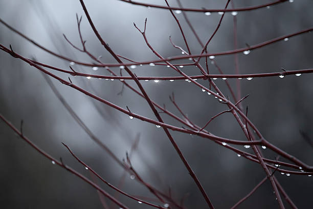 Tree branches with rain drops. Autumn background stock photo