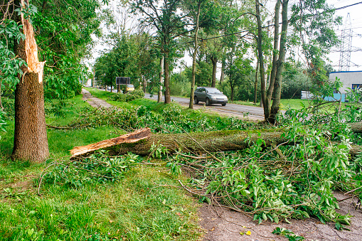 tree broken by a storm lies on the road