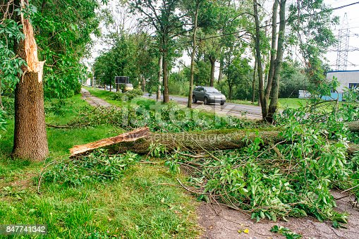 istock tree broken by a storm lies on the road 847741342