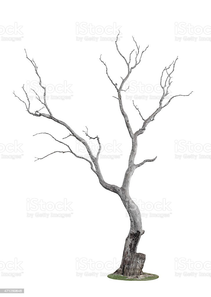 tree burnt by fire stock photo