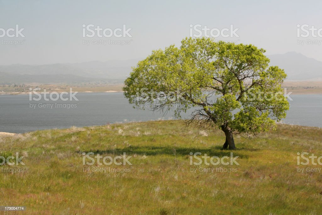 Baum am See – Foto
