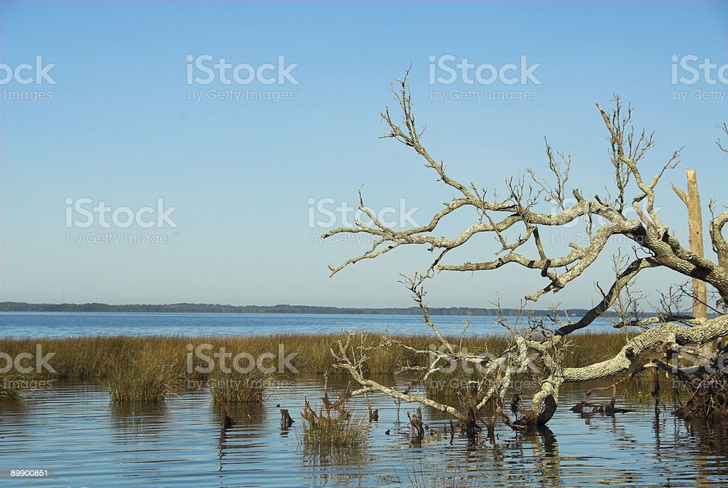 Tree by Currituck Sound stock photo