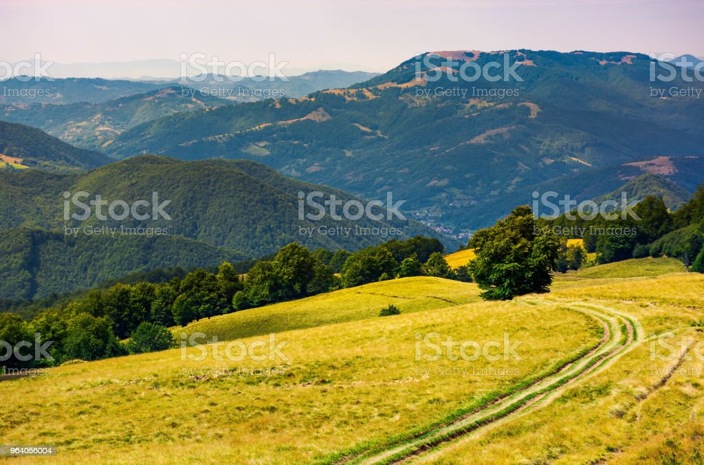 tree by the country road winding down the hill - Royalty-free Beauty Stock Photo