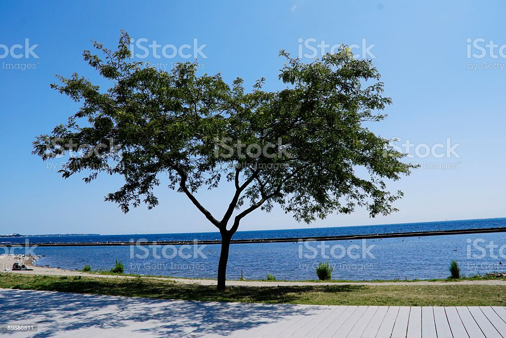 Tree by the Lake royalty-free stock photo