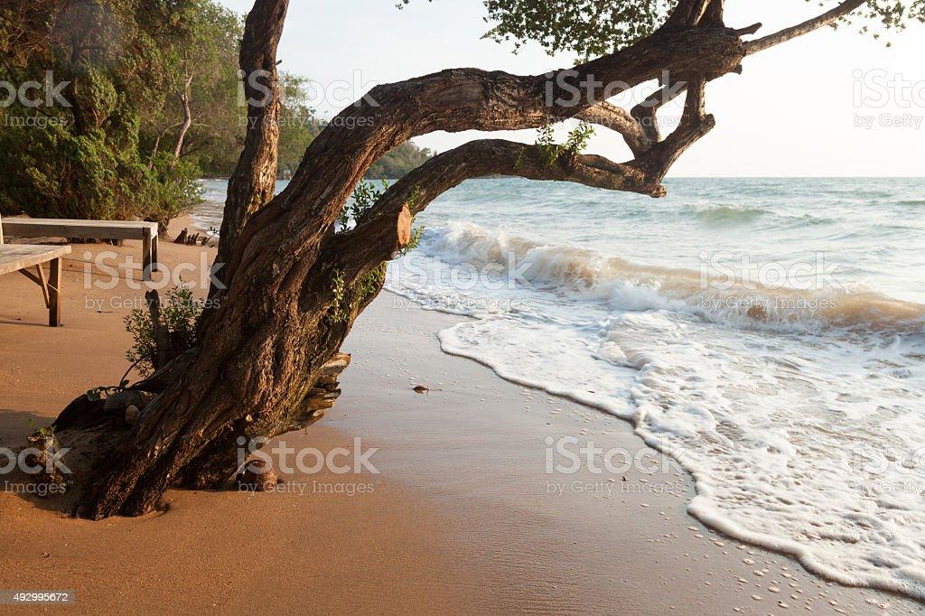 Baum am sea – Foto
