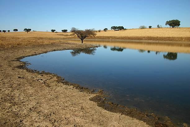 árvore da água - barragem portugal imagens e fotografias de stock