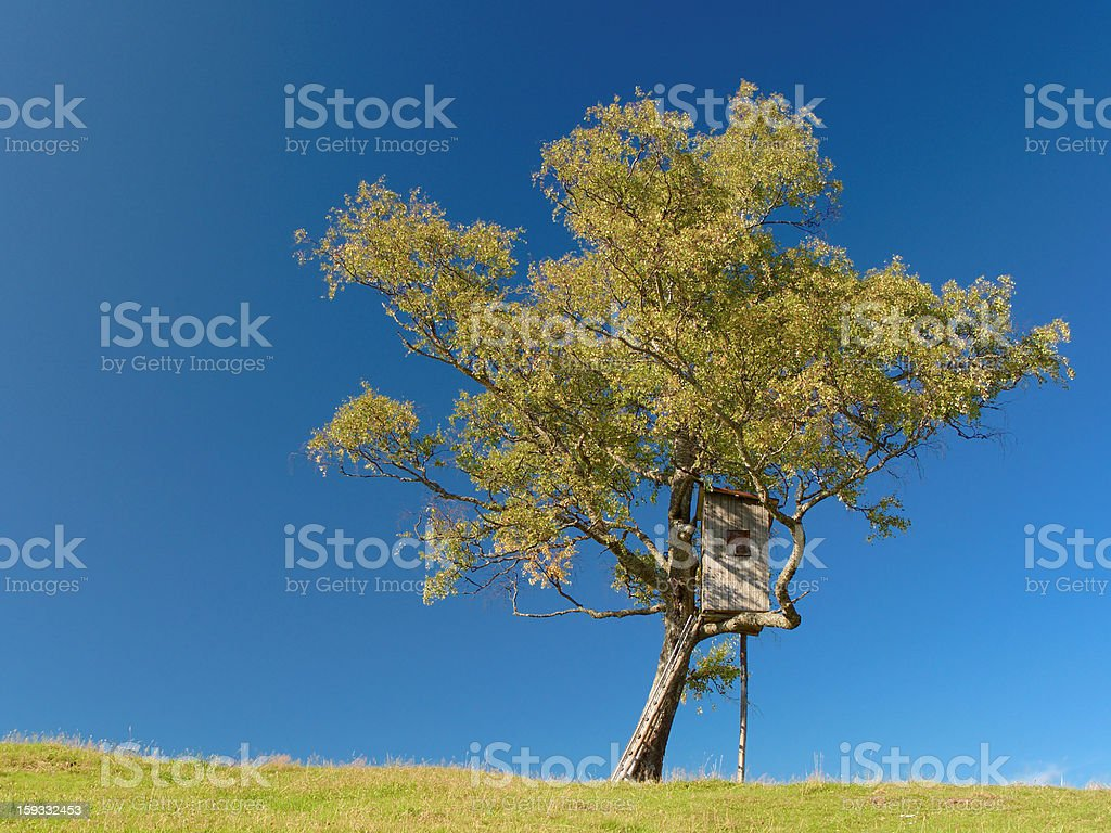 tree cabin on a hill stock photo