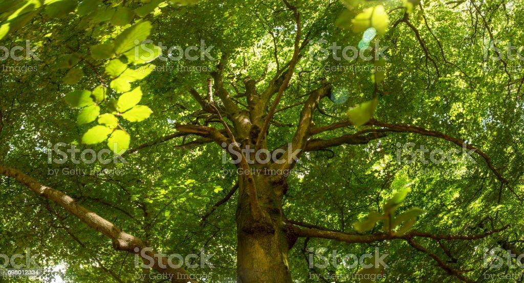 Copa de árbol a la luz solar del amanecer - foto de stock