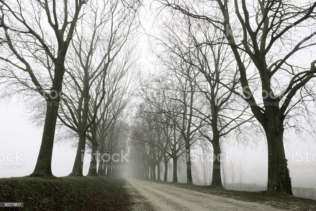 Tree canopy in the fog royalty-free stock photo