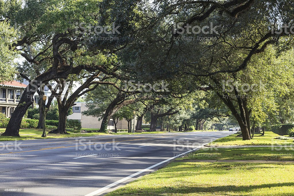 Tree canopy over boulevard in Mobile, Alabama royalty-free stock photo
