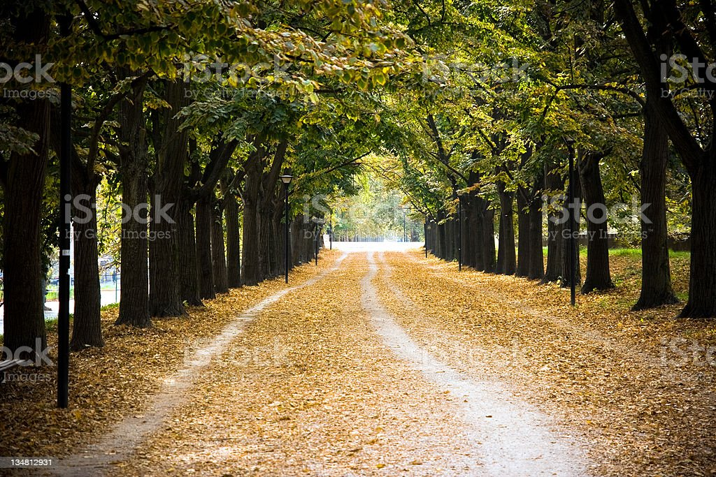 Tree canopy royalty-free stock photo