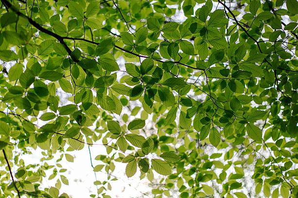 Tope de los árboles - foto de stock