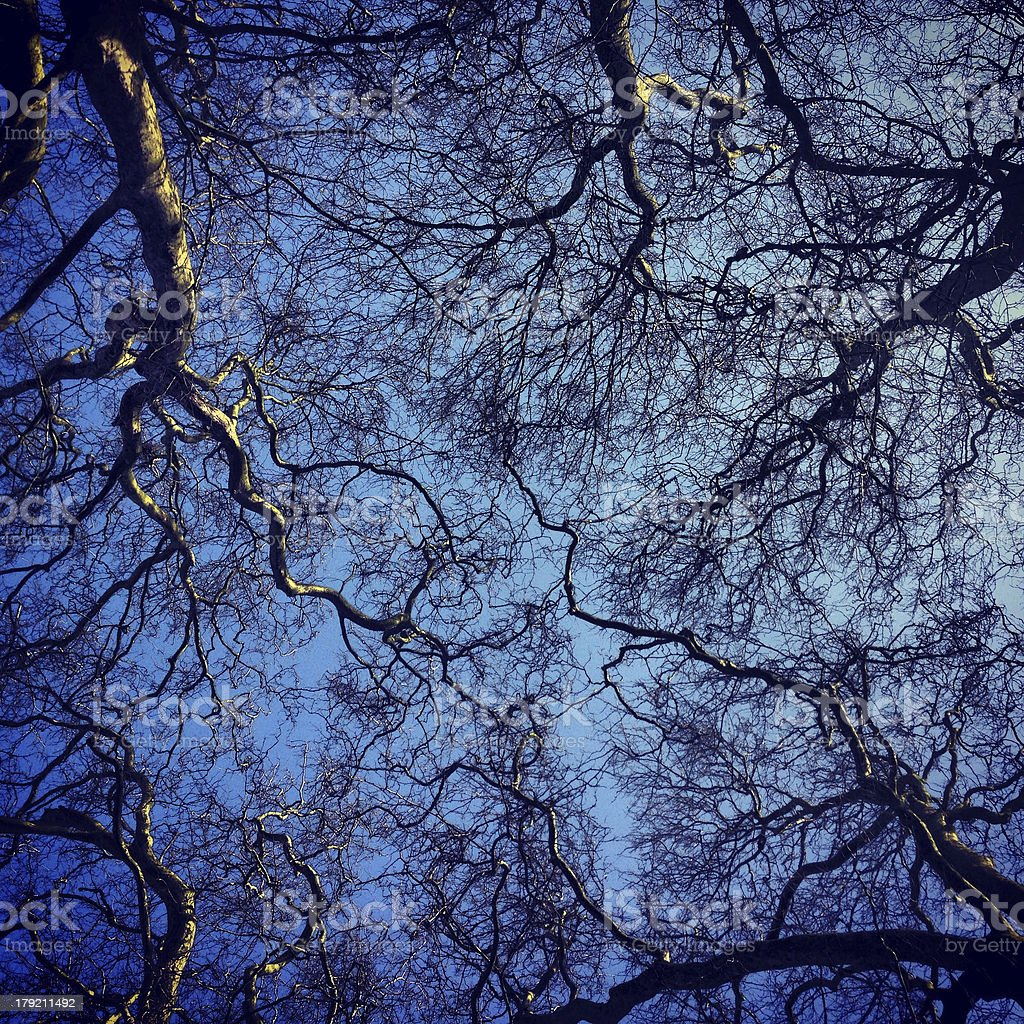 Tree Canopy Silhouette on Blue Sky royalty-free stock photo