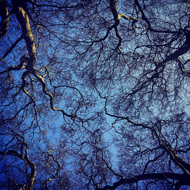 Tree Canopy Silhouette on Blue Sky stock photo