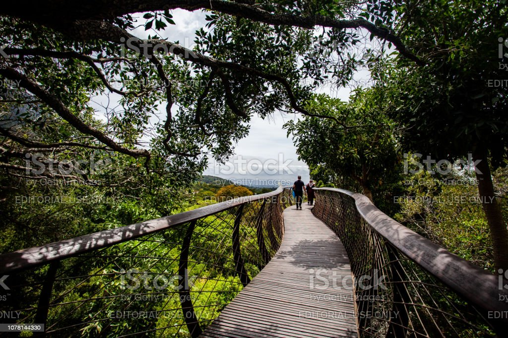 Tree canopy walkway in Kirstenbosch gardens, Cape Town, South Africa stock photo