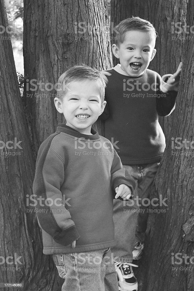 Tree Climbers royalty-free stock photo