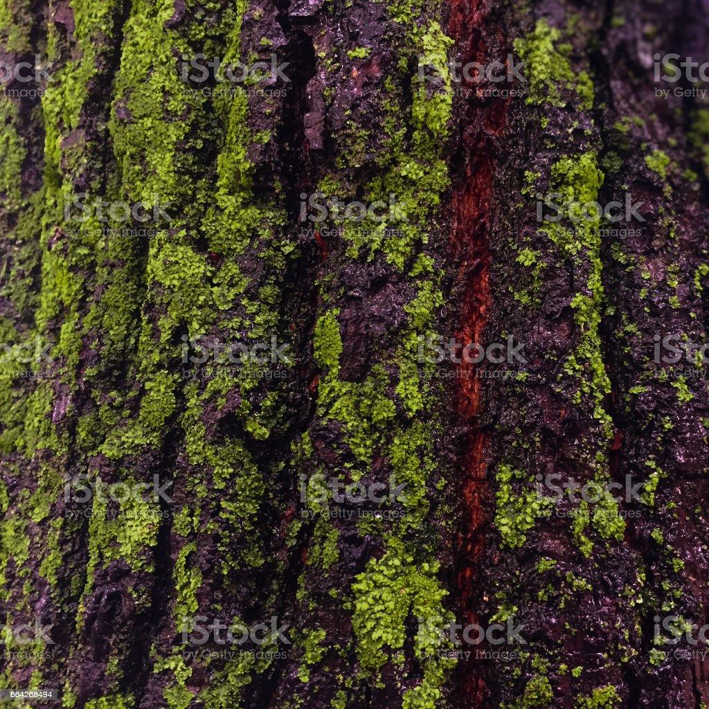 Tree close-up after rain royalty-free stock photo