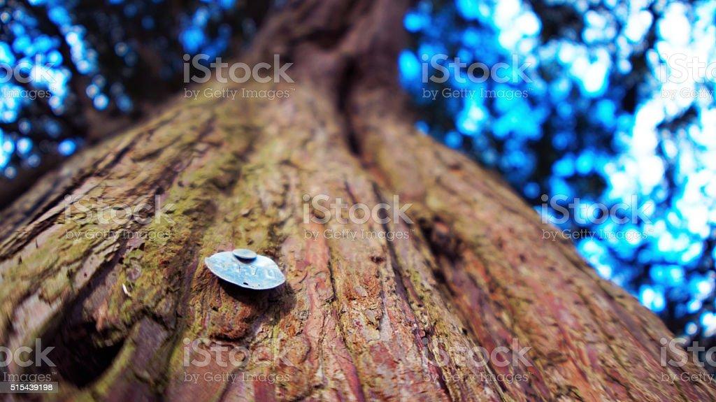 Tree closeup stock photo