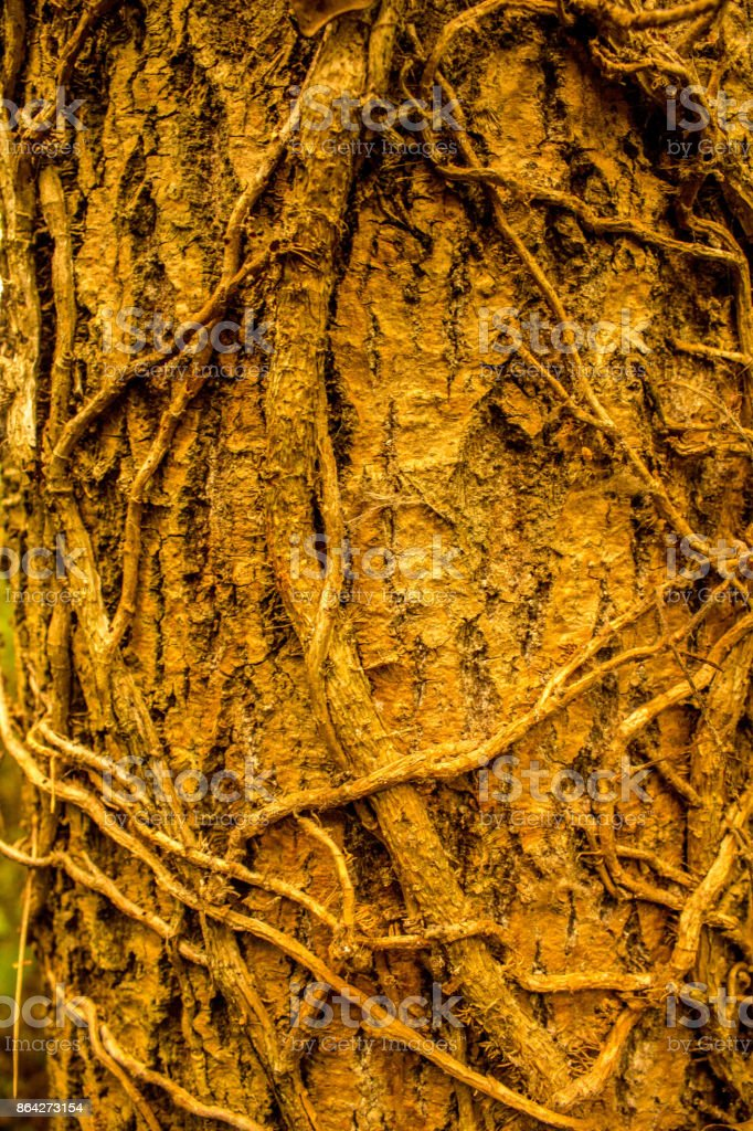 Tree Closeup royalty-free stock photo