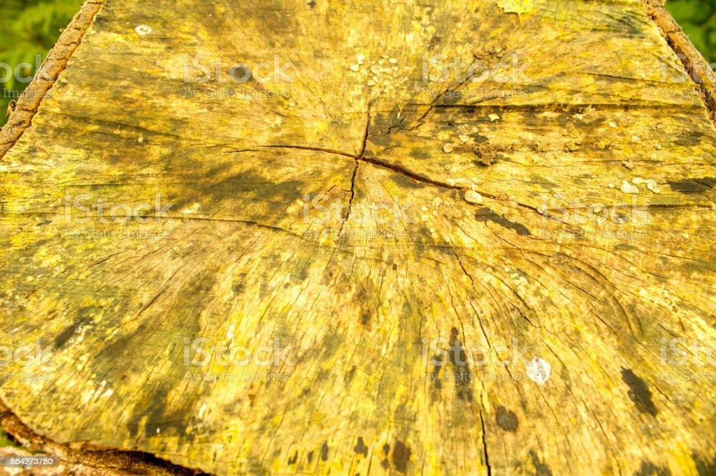 Tree Closeup royalty-free stock photo