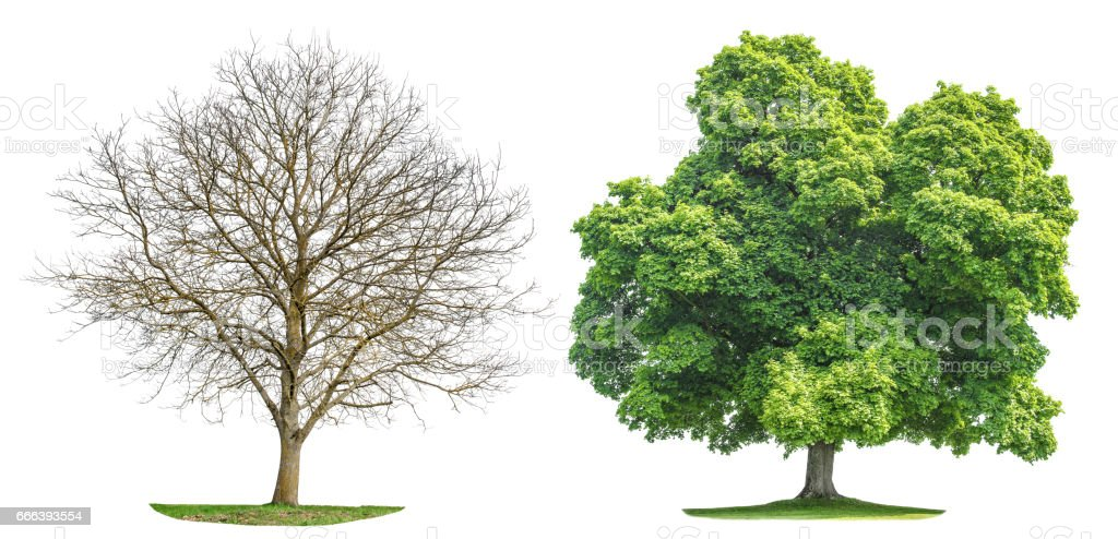Tree collection isolated Spring summer silhouette stock photo