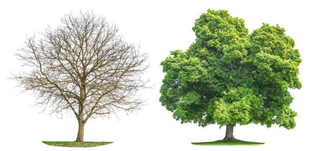 Coleção árvore isolada silhueta de primavera verão - foto de acervo