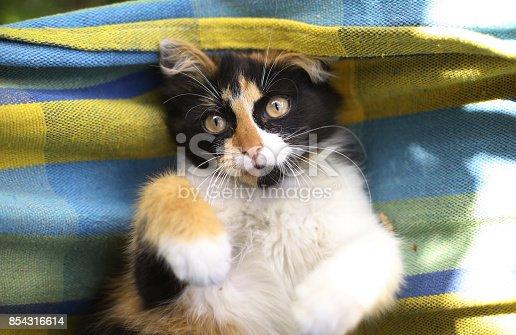 istock tree color kitten lay in hammock 854316614