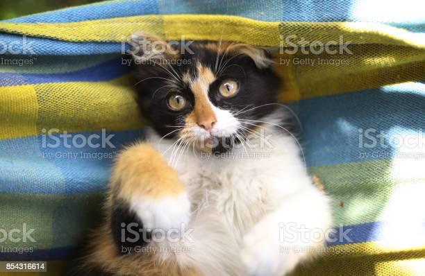 Tree color kitten lay in hammock picture id854316614?b=1&k=6&m=854316614&s=612x612&h=jnnkrzb sfs qpmgaizntc camyfzntd kr3cemyjlm=