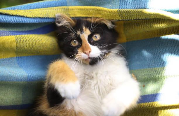 tree color kitten lay in hammock - котик яркий стоковые фото и изображения
