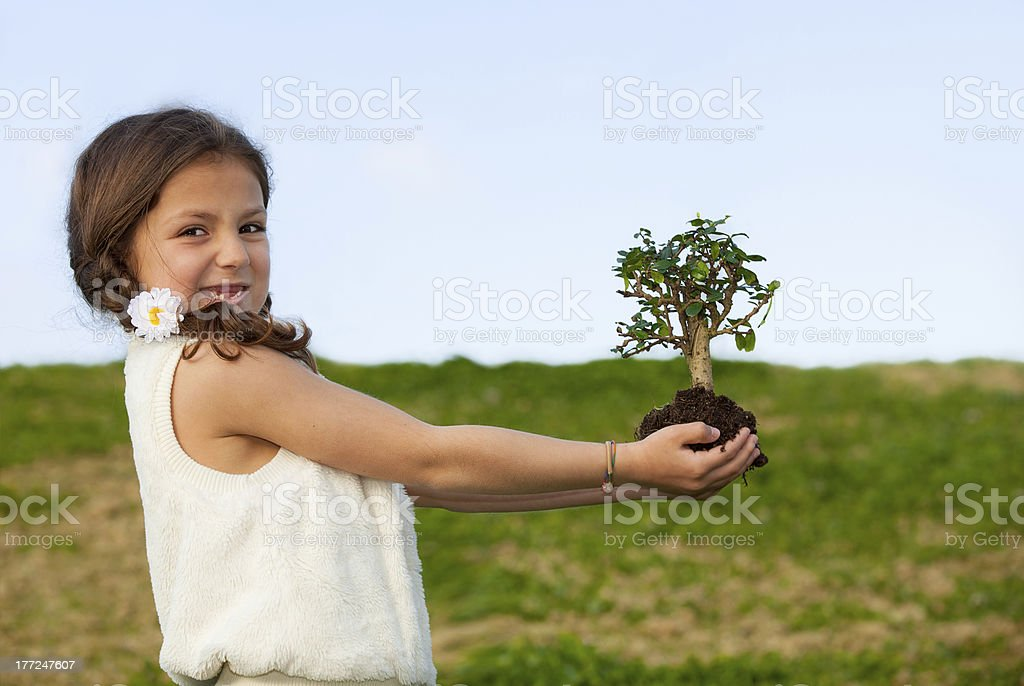 tree concept for nature and environment royalty-free stock photo