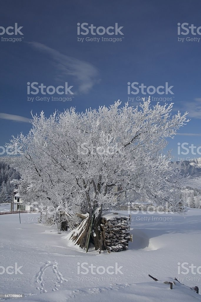 Tree cover by frost stock photo