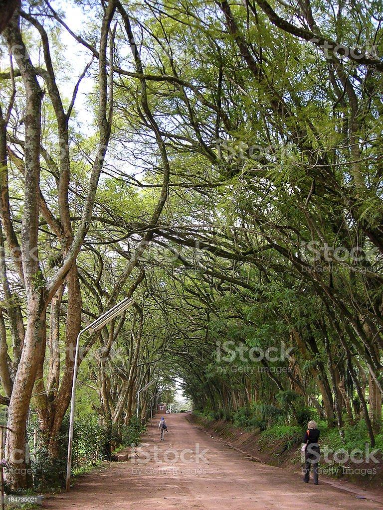 Tree Covered Dirt Road National University of Rwanda royalty-free stock photo