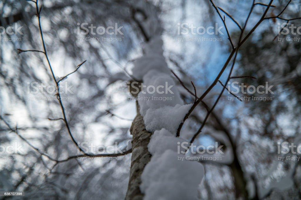 Tree in Schnee bedeckt – Foto