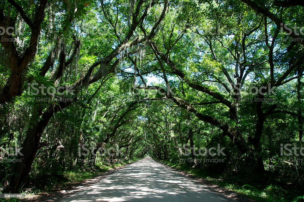 tree covered road stock photo