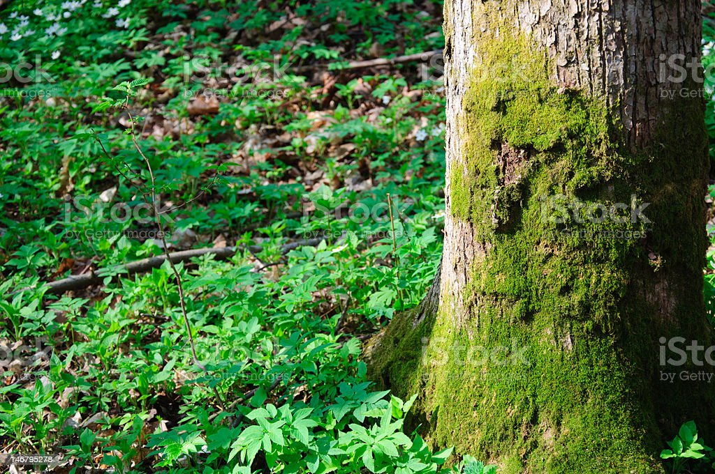 Tree covered with moss stock photo