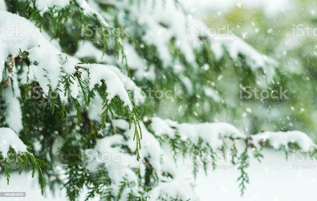 Tree Covered with Snow - Royalty-free Abeto Foto de stock