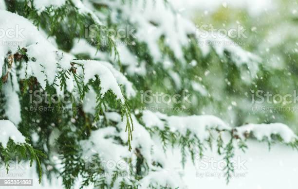 Tree Covered With Snow - Fotografias de stock e mais imagens de Abeto